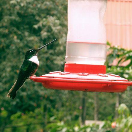 hummingbird, bird, beautiful, Fujifilm FinePix F550EXR