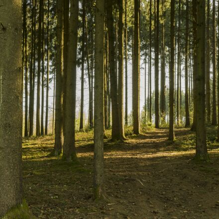 panorama, forest, away, Sony ILCE-6300