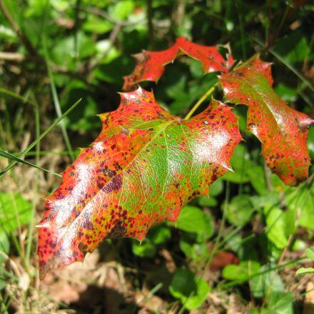 autumn, leaf, mood, Canon DIGITAL IXUS 85 IS