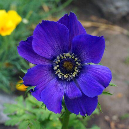 flower, flowers, bloom, Sony SLT-A77V