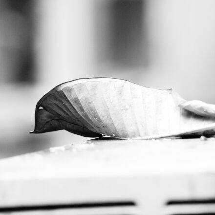 curved, leaf, Sony SLT-A58