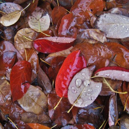 wet leaves, fall foliage, Canon DIGITAL IXUS 860 IS