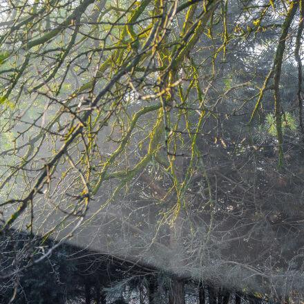 branches, light, shadows, trees, Canon EOS 7D