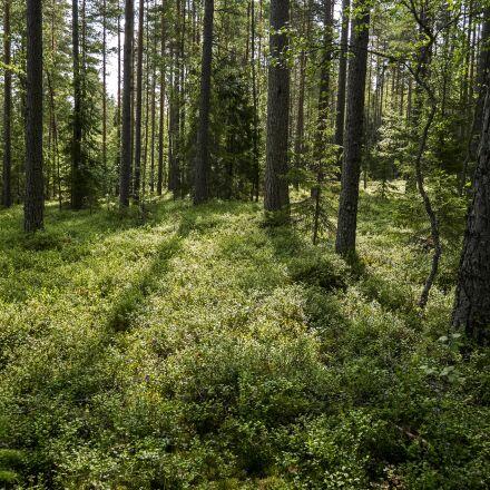 wood, summer, finland, Panasonic DMC-GM1