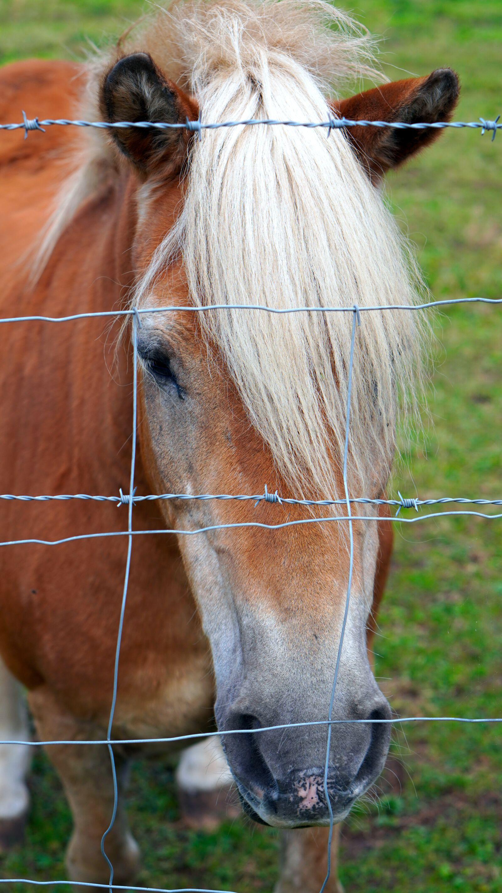 "Sony a6400 sample photo. ""Horse, animal, horse head"" photography"