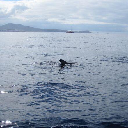 whale, sea, holiday, Canon DIGITAL IXUS 990 IS
