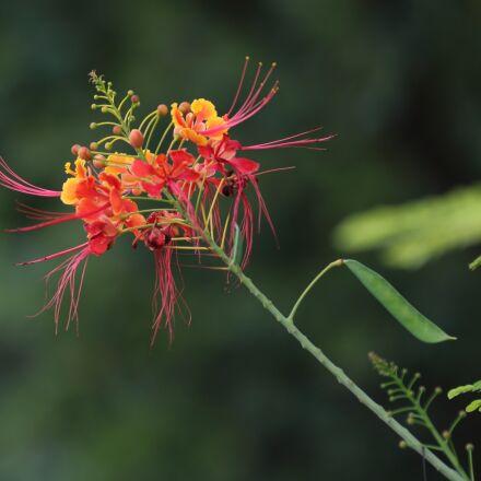 nature, plant, leaf, Canon EOS 5D MARK III