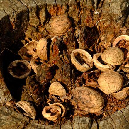nusschalen, tree, nuts, Fujifilm X-E1