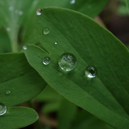 leaf, drop, fresh, Sony DSC-T70