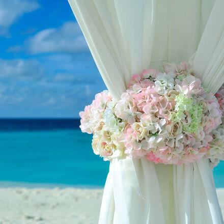 pink, white, petal, flower, Nikon D700
