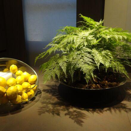 lemon, citrus fruits, decoration, Sony DSC-WX9