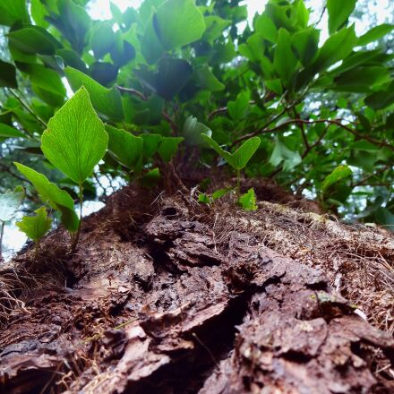 tree, green, leaf, Sony DSC-WX150