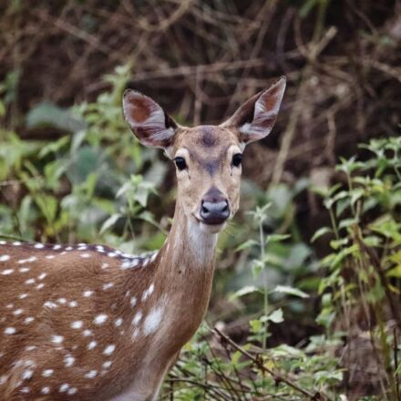 animal, deer, fawn, wilderness, Canon EOS 600D