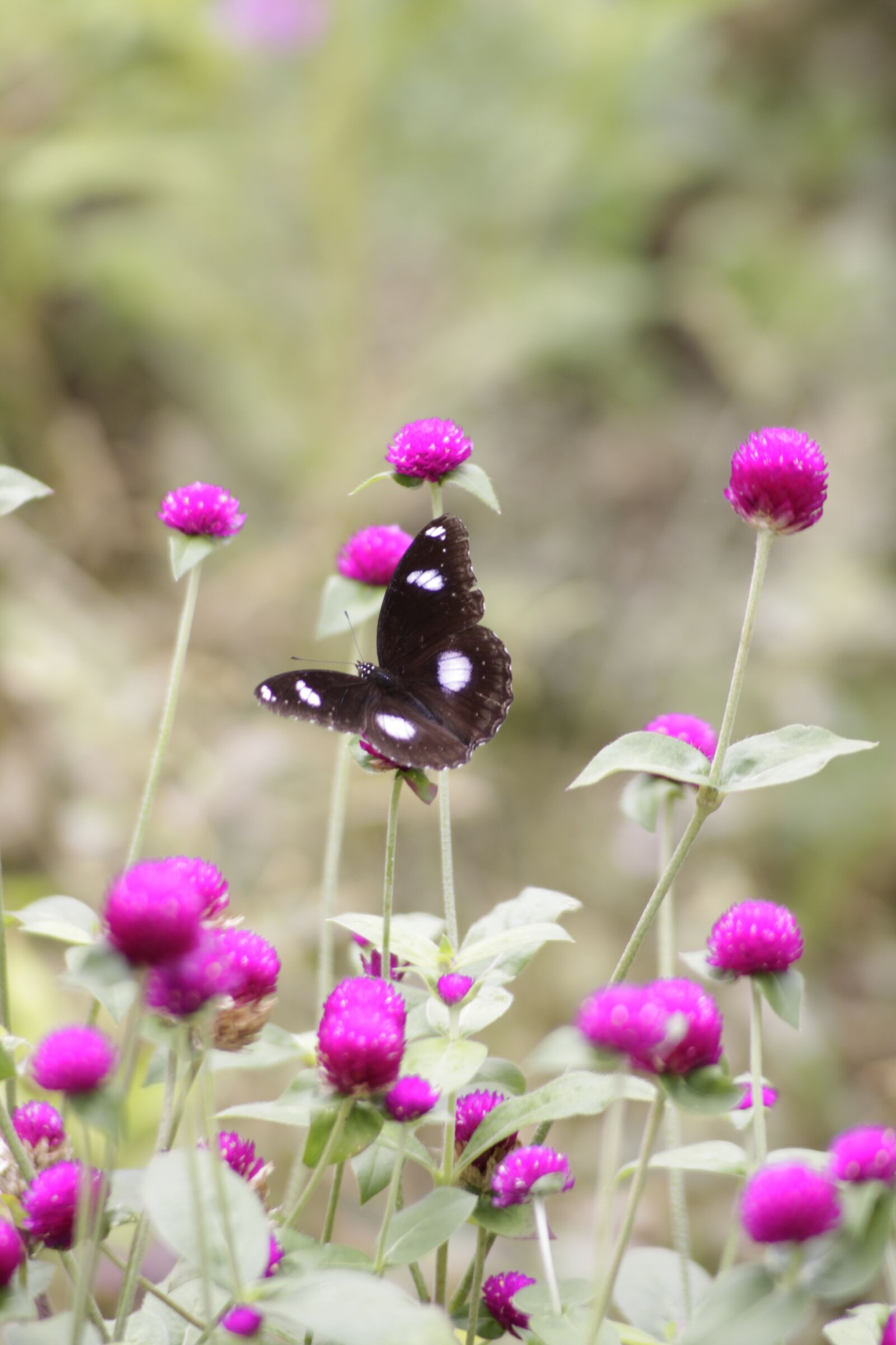 """Canon EOS 50D sample photo. """"Butterfly, flower, insect"""" photography"""