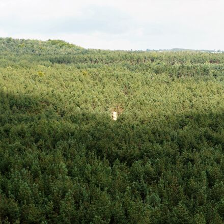 forest, view, landscape, Sony NEX-5N