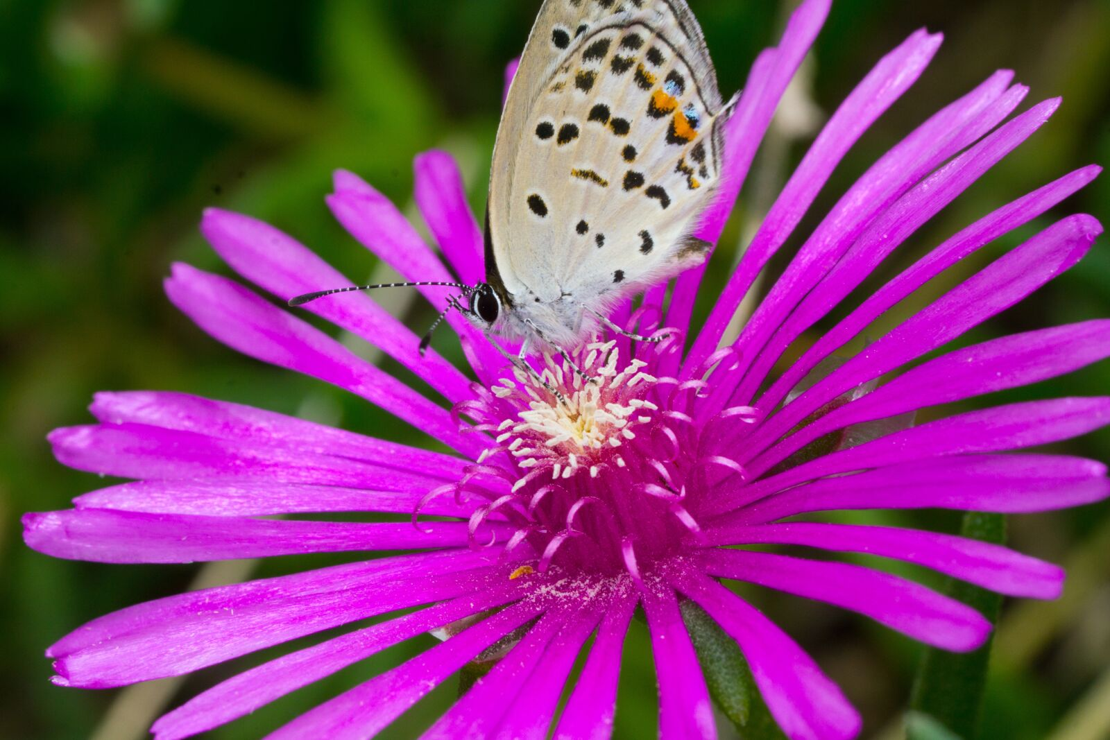"""Sony a6000 sample photo. """"Butterfly, insects, macro"""" photography"""