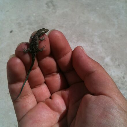 lizard, hand, reptile, Apple iPhone 3GS