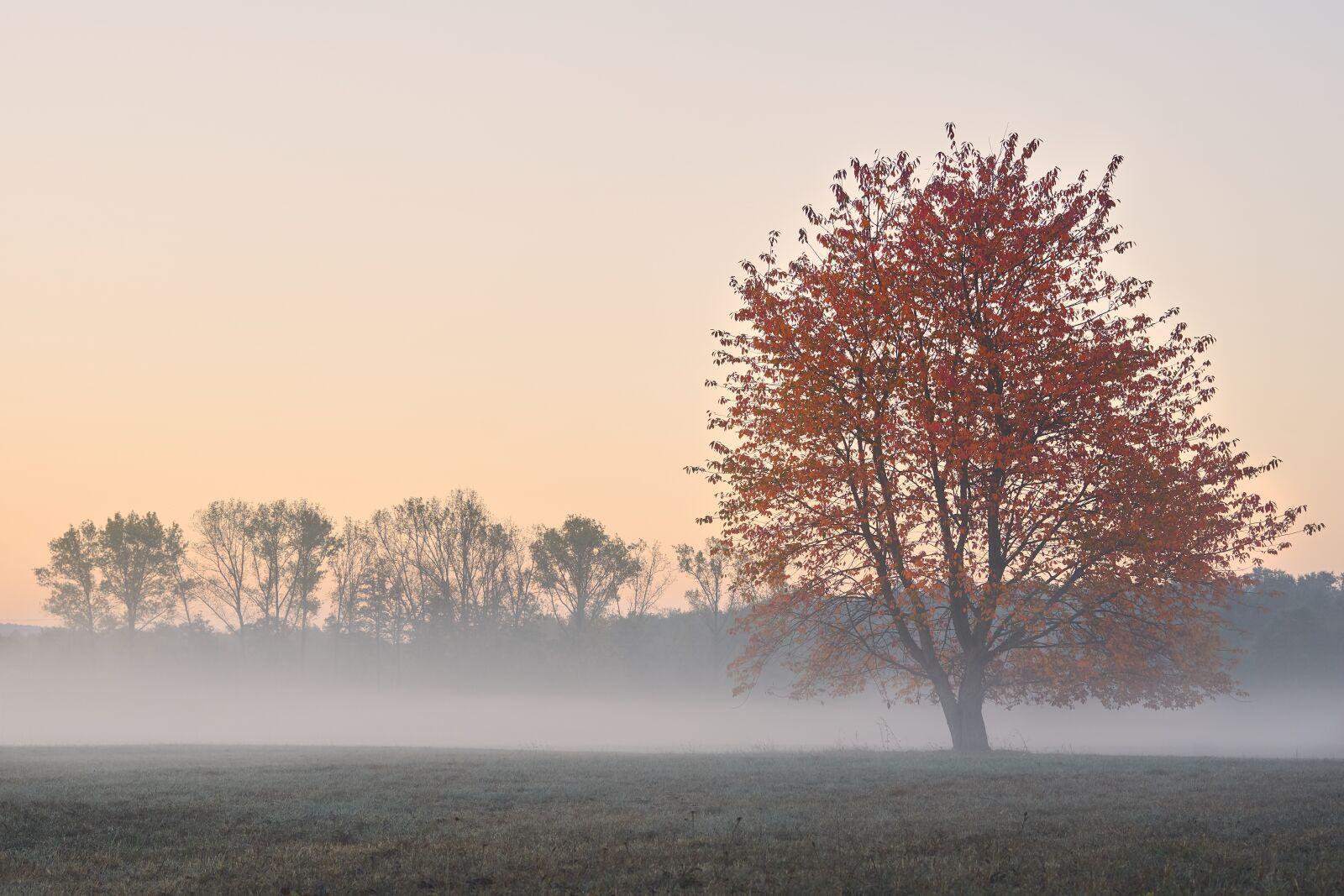 """Sony a6000 sample photo. """"Autumn, tree, fog"""" photography"""