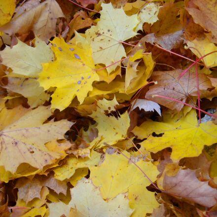 dried leaves, leaves, autumn, Nikon COOLPIX L18
