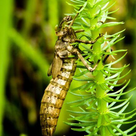 insect, nature, biology, Panasonic DMC-FZ38