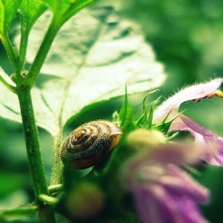 nature, green, snail, Panasonic DMC-FS62