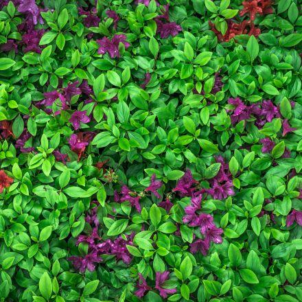 leaf, flowers, nature, Sony NEX-5N