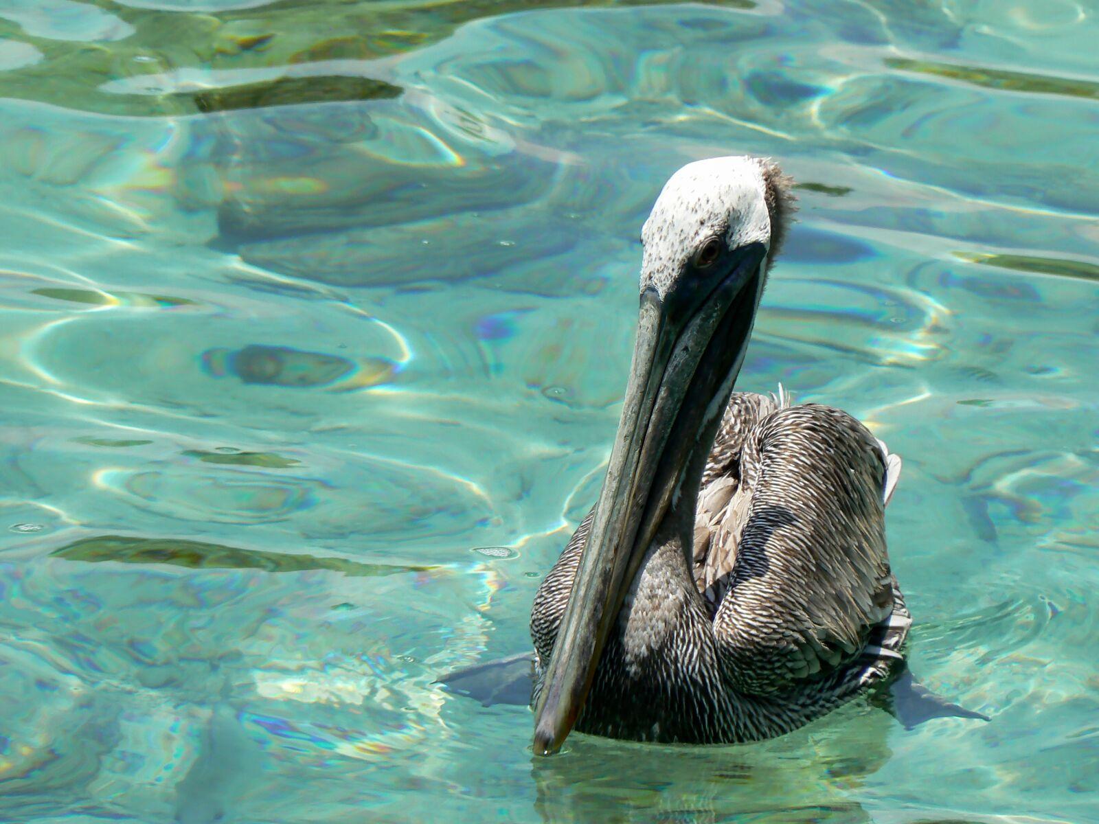 "Panasonic DMC-FZ7 sample photo. ""Colombia, cartagena, pelican"" photography"