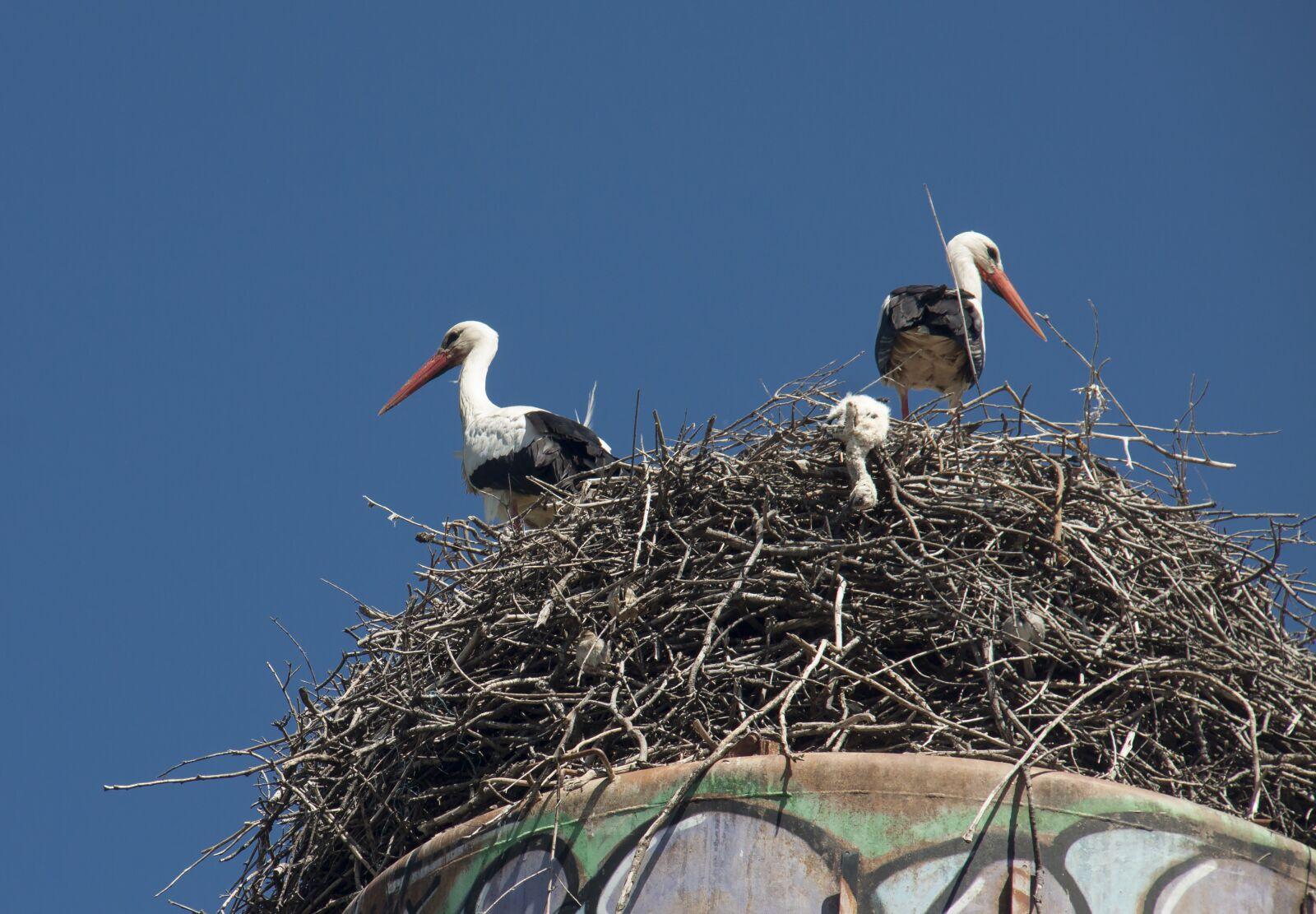"Canon EOS 50D sample photo. ""Storks, stork's nest, nest"" photography"
