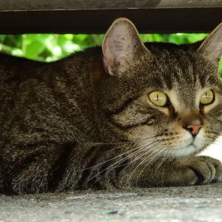 cat, hiding place, shadow, Nikon COOLPIX B700