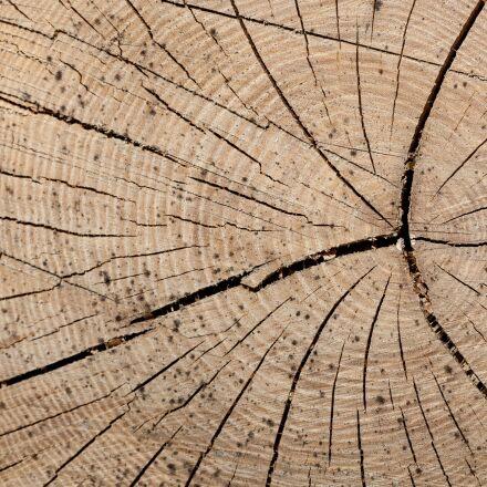 wood, trunk, rings, Canon EOS 5D MARK II