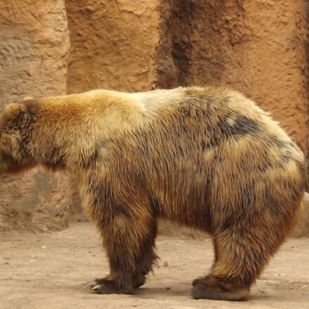 bear, zoo, captivity, Fujifilm FinePix S4500