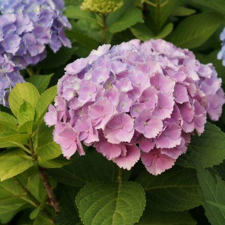 flowers, nature, flower, Sony NEX-6