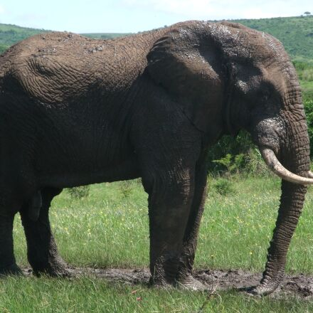 elephant, safari, south africa, Fujifilm FinePix F100fd