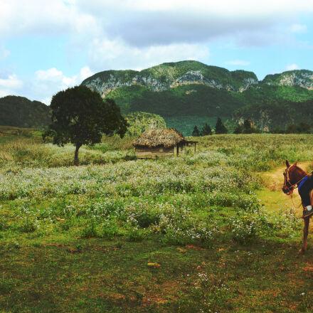 landscape, nature, countryside, spring, Nikon D5100