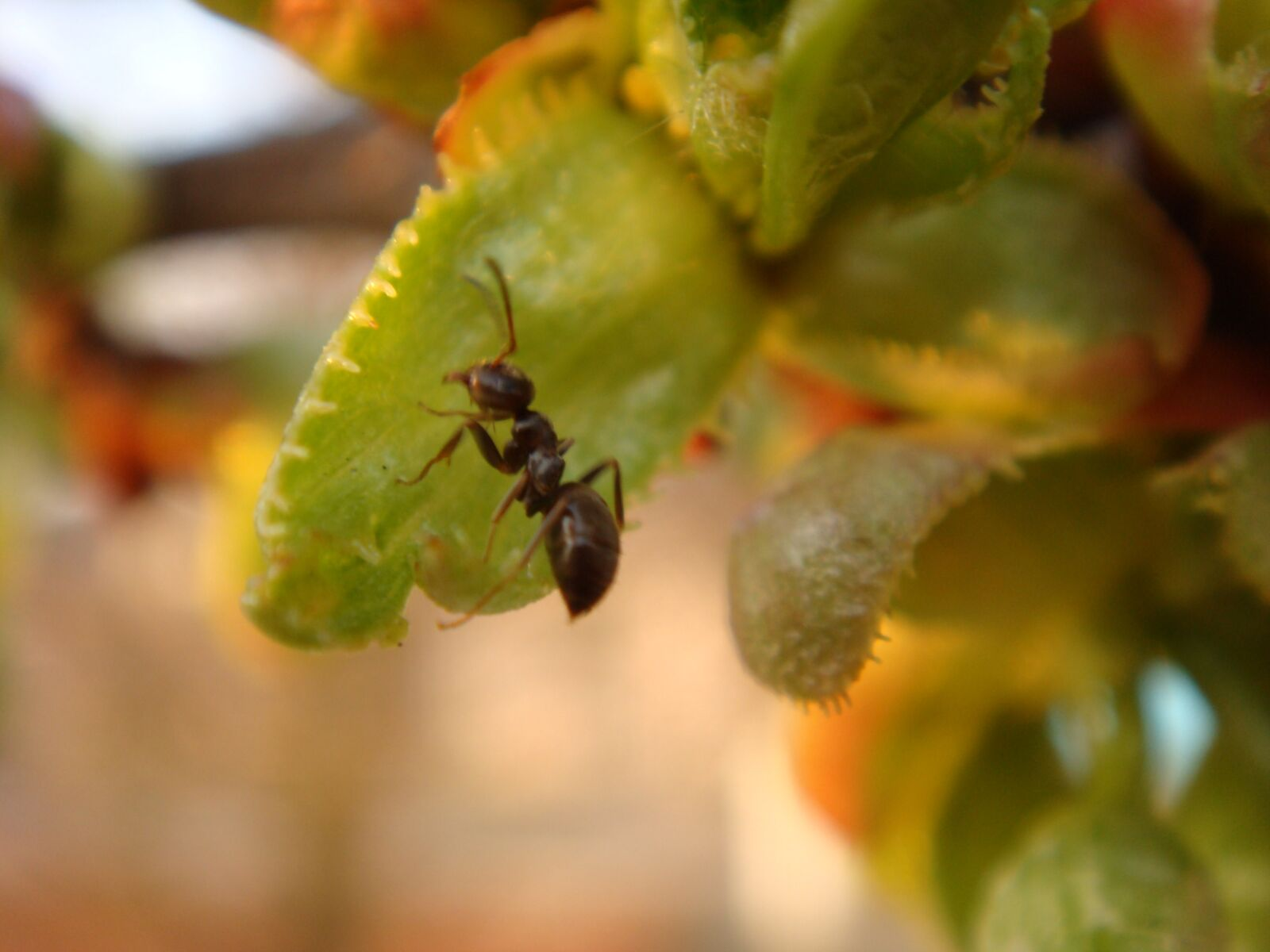 ant, insect, nature