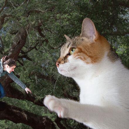 acrophobia, cat, selfie, Canon EOS 7D