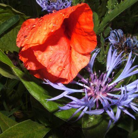 flowers, flower, red flower, Fujifilm FinePix S3500