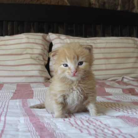 kitten, cute, cat, Fujifilm FinePix C10
