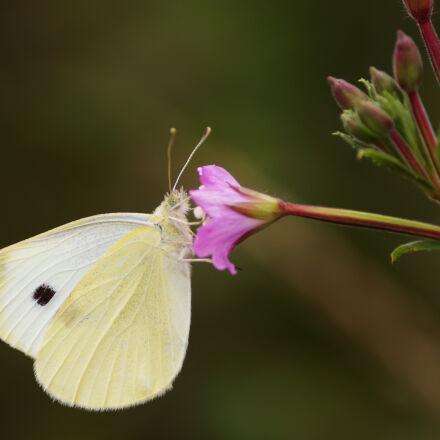 yellow, animal, flower, pink, Sony SLT-A58