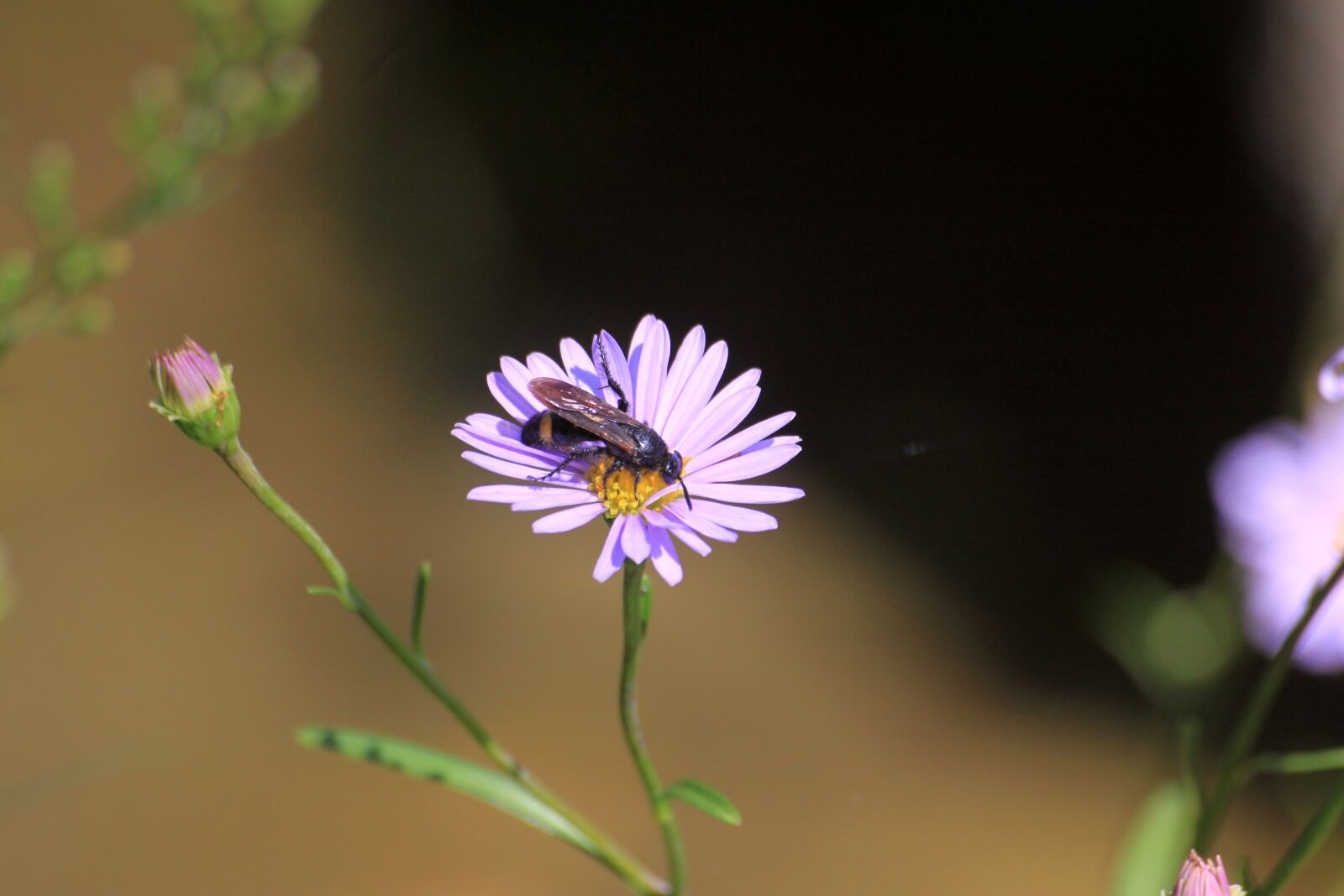 """Canon EOS 50D sample photo. """"Bee, flowers, insects"""" photography"""