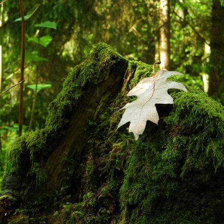 leaf, moss, forest, Nikon COOLPIX B700