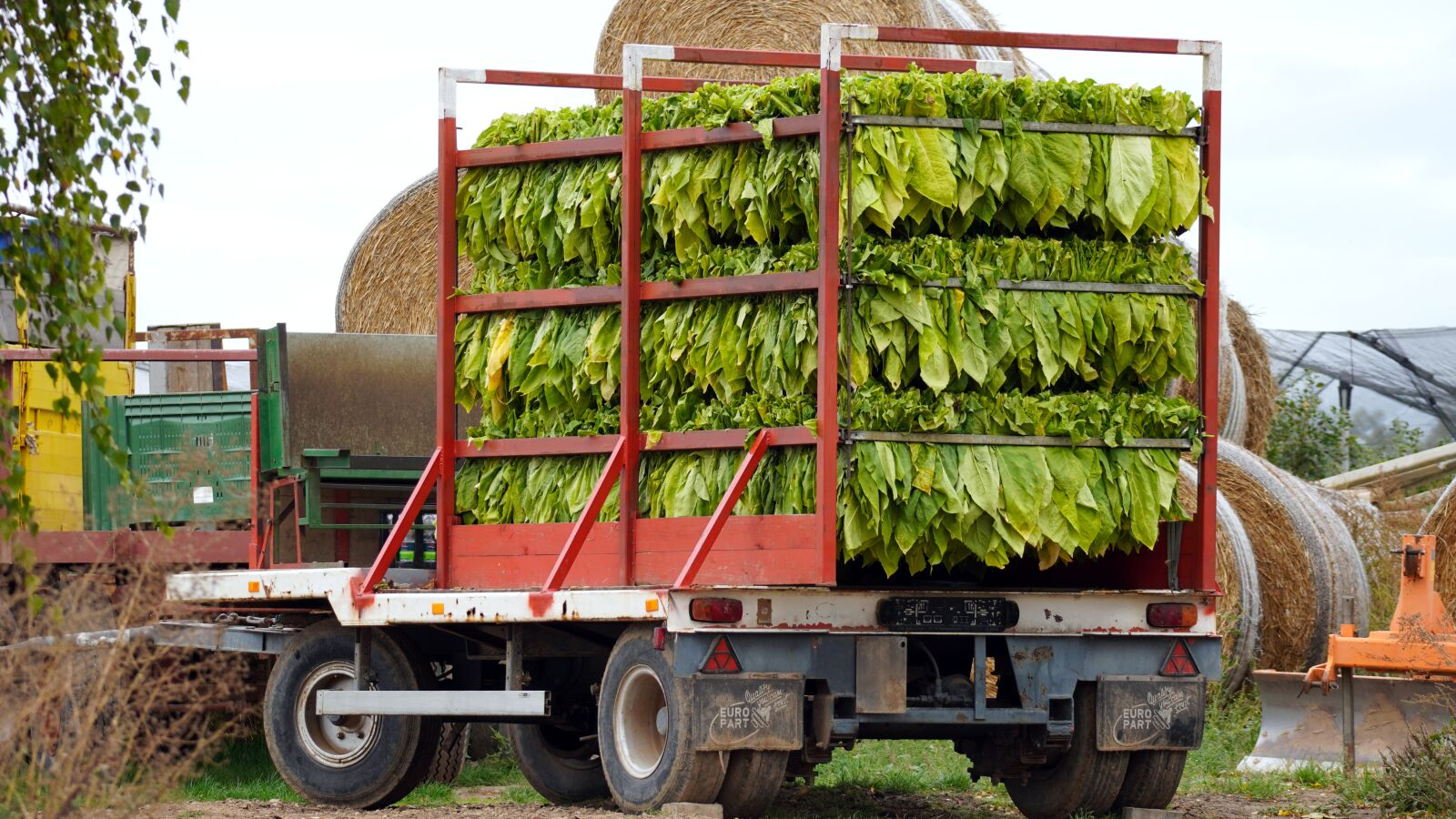 """Sony a6400 sample photo. """"Tobacco harvest, tobacco, tobacco"""" photography"""