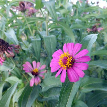 purple, green, flowers, Fujifilm FinePix F550EXR