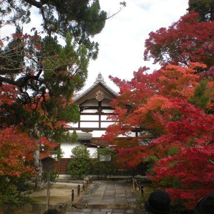 kyoto, japan, autumn, Nikon COOLPIX S210