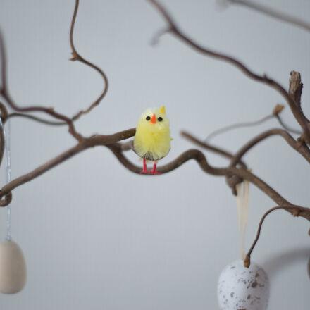 chicken, easter, eat, eggs, Nikon D600