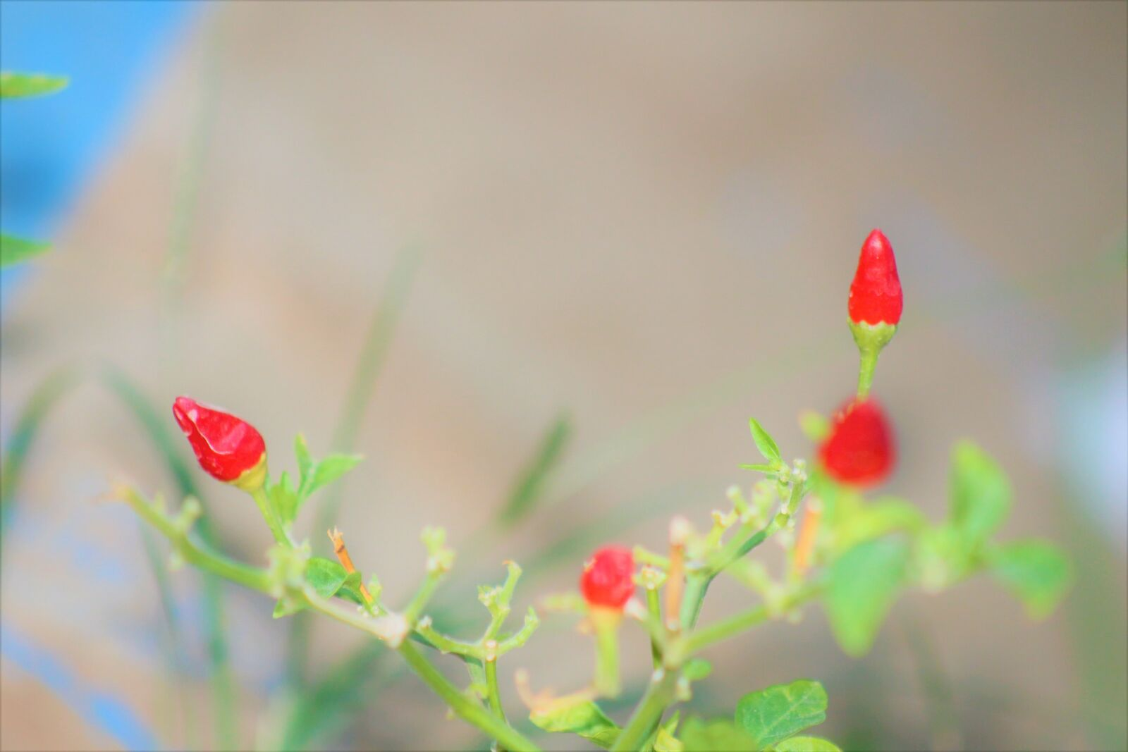 "Canon EOS 1100D (EOS Rebel T3 / EOS Kiss X50) sample photo. ""K rm z"" photography"