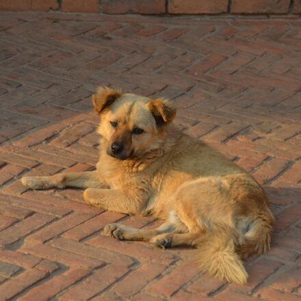dog, sunshine, Nikon D5100