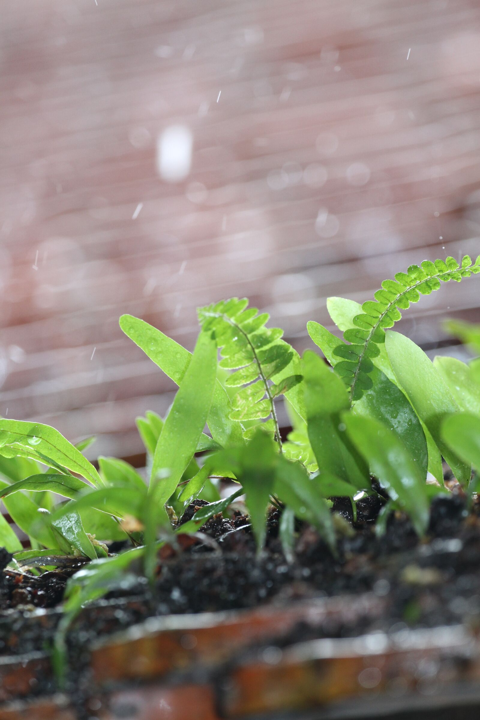 "Canon EOS 7D sample photo. ""It's raining, fern, green"" photography"
