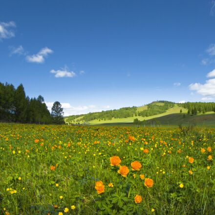 spring, flowers, meadow, Canon EOS 5D MARK III