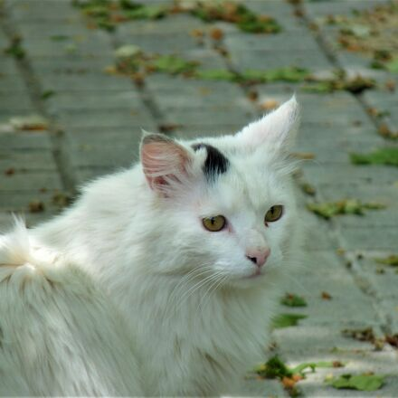 cat, kitten, animal, Panasonic DMC-FZ38